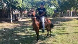 Vendo caballo p4