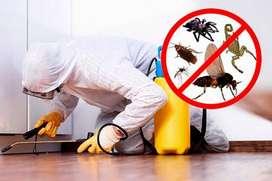 fumigacion contra plagas en pereira