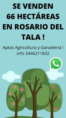 Se venden 66 hectáreas Rosario de tala