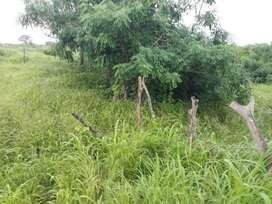 Venta de Terreno en Bajada de Chanduy con riego / Santa Elena