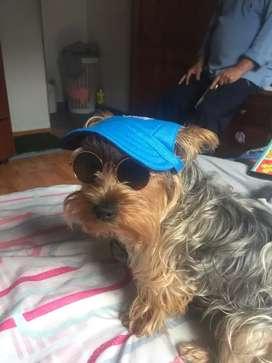 Gorras para perro o gato