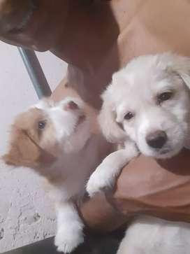 2 perritos cooker