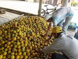 Se vende naranja al por mayor o por camiones