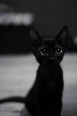 se regala gatitos