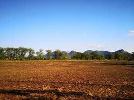 18 hectáreas planas - Cultivos Ganaderia