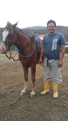 Venta de dos caballos
