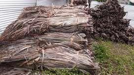 Venta de Palma amarga y punta aguja para kioscos cabañas ranchos bohios con ficha técnica Sincelejo sucre
