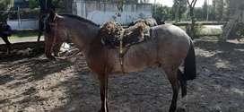 Ventá de caballo