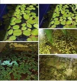 Vendo plantas aquaticas especiales para aquarios