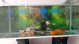 peces y acuario