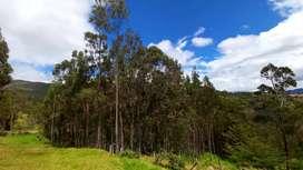 Se vende  1 hectarea De bosque de Eucalipto. Ubicado en cantón Oña