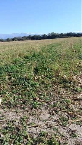 Alquilo campo en Trancas - Tucuman