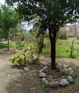 Vendo hermosa finca en el valle de la longevidad  Vilcabamba.