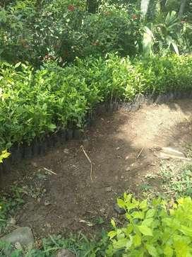 Venta de Plantas Y Grama