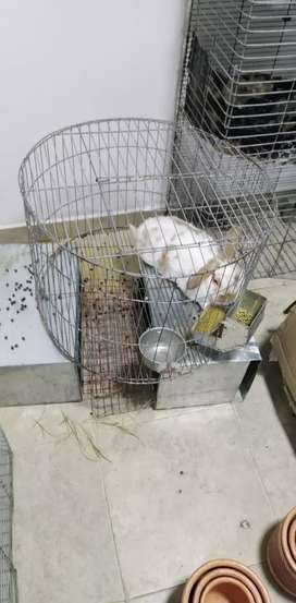 Conejos para criadero o mascotas