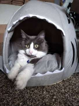 Camas Cómodas Para Mascotas: Gatos