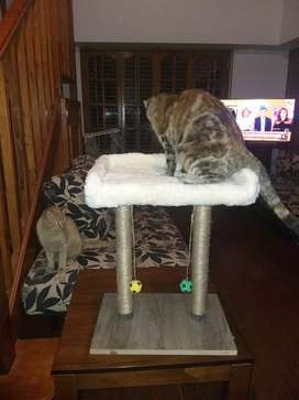 RASCADORES de Gatos