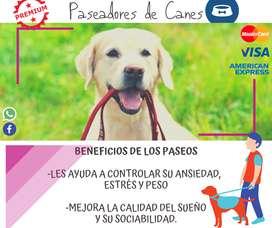 PASEADORES DE CANES!