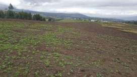 De oportunidad  2 hectáreas  de terreno