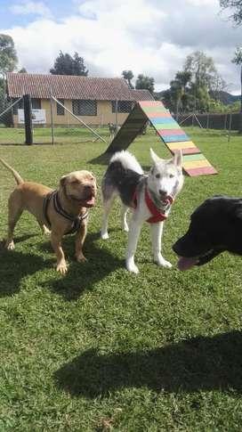 Guardería canina campestre