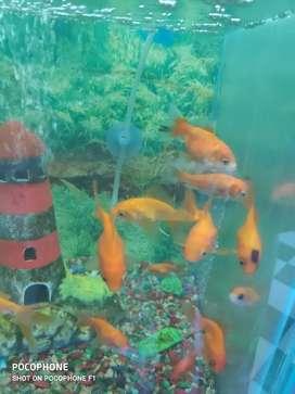 Accesorios para peces
