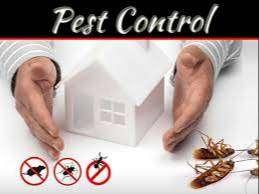 Pest control 24/7 Bogotá. Fumigaciones De plagas Pulgas Acaros Cucarachas Ratones Ratas Moscas Zancudos