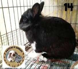 Venta de conejos y hamsters