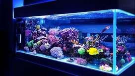 Todo para peces   Acuarios   peces   filtros etc