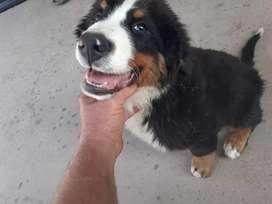 Último cachorro