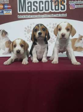 Príncipes y princesas beagle