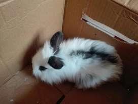 Vendo Conejos de 1 Mes a Domicilio Quito