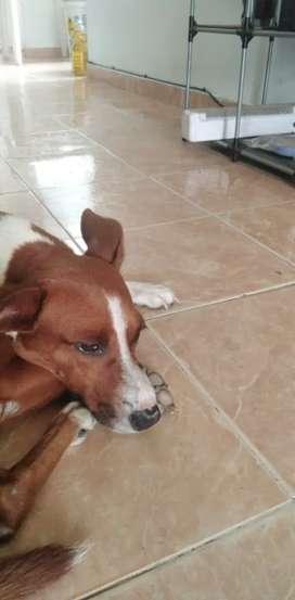 Perrito para adopción