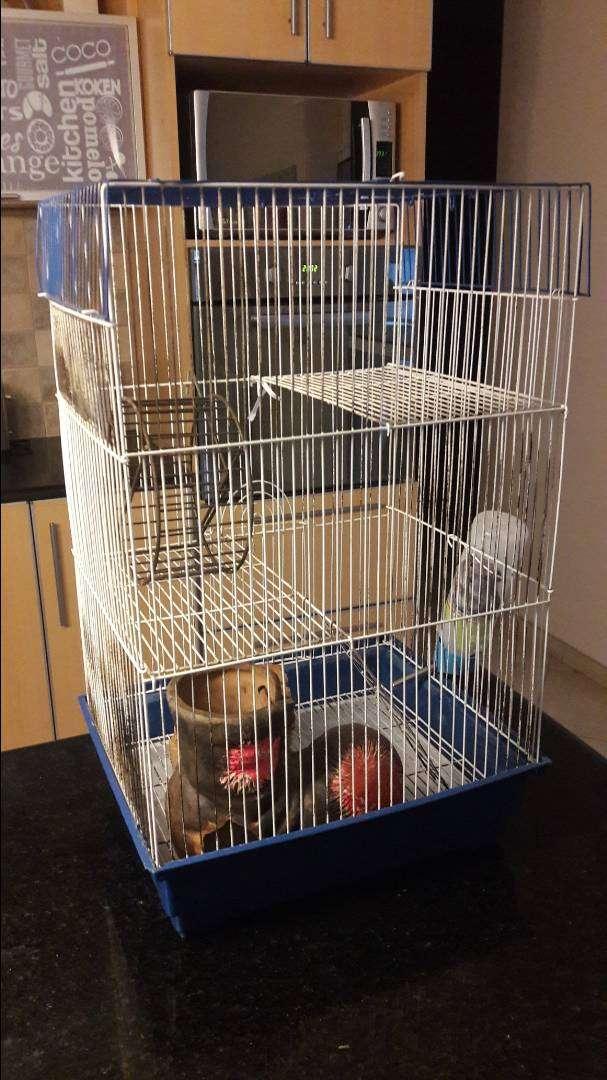 Jaula para roedores o cobayos 0