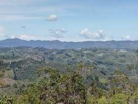 Lote, Terreno 5000 Mts, con Nacimiento