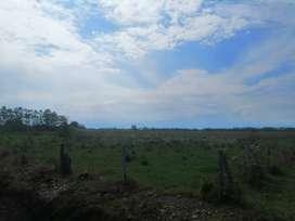 Lote de 5 hectáreas - Excelente Ubicación - Yopitos