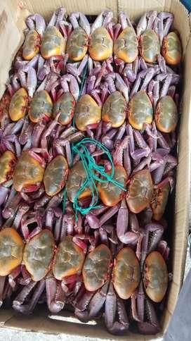 Distribuidora de mariscos
