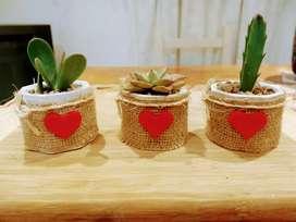 Souvenirs de cactus y suculentas