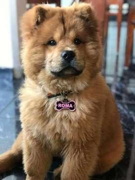 Placas personalizadas para mascotas