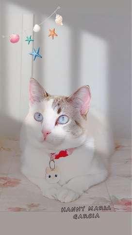 Adopta hermosa gata
