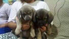 Perritos en adopción 3 cachorritos