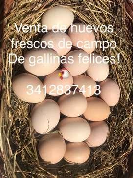 Venta de huevos organicos