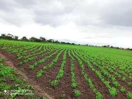 venta de 6 hectáreas productivas de terreno en Mira, Carchi