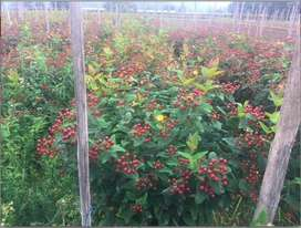Checa Terreno (Plantaciones) Linda Vista