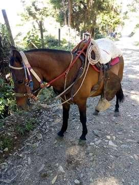 Vencambio hermoso caballo por moto