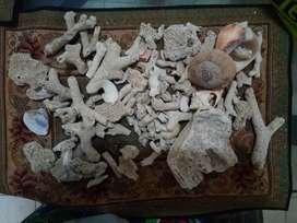 Adorno corales
