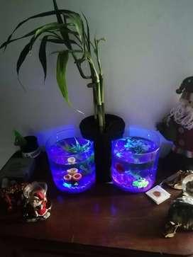 Pecera doble para bettas con Luz Led, base para planta todo incluido con peces