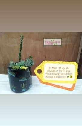 Cactus, terrarios