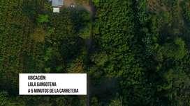 Finca 9 hectáreas en Lola Gangotena