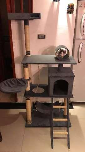 Hermosos y nuevos Gimnasios para gatitos
