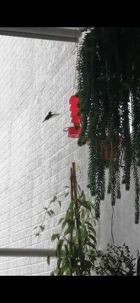 Bebederos para colibrí